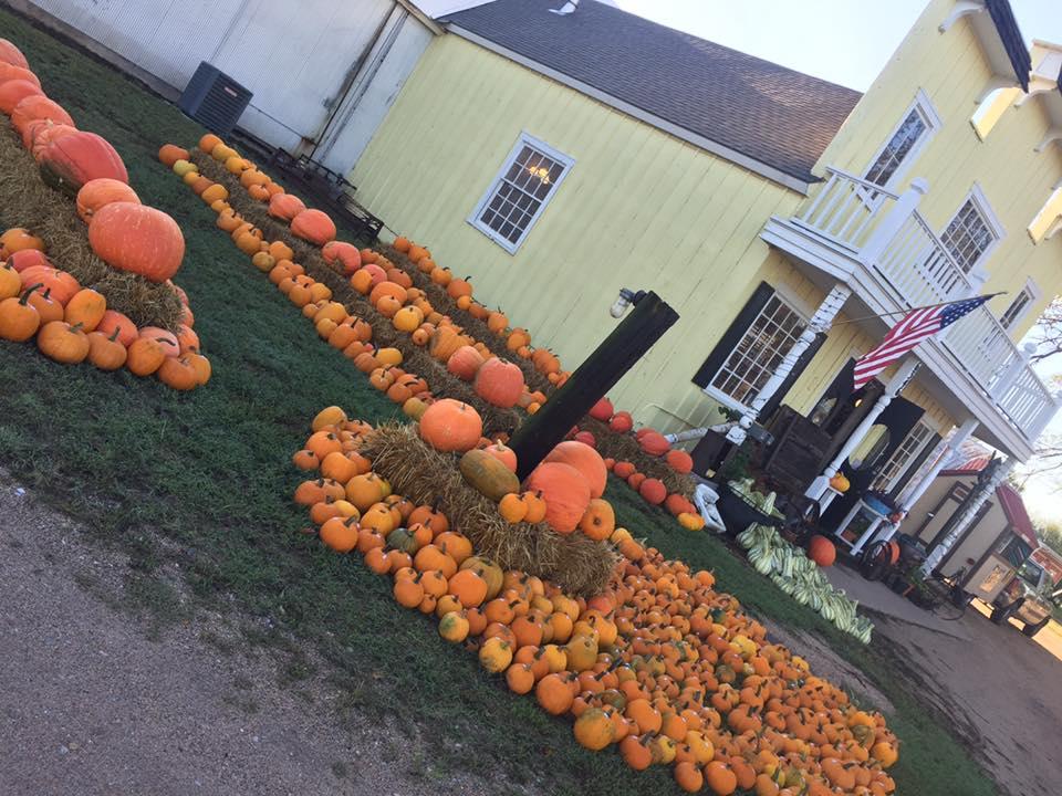 pumpkins for sale.jpg