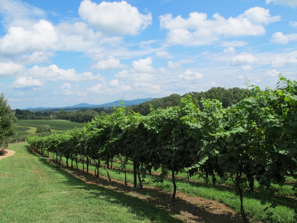 Frogtown Cellars and Vineyard, Dahlonega, Georgia