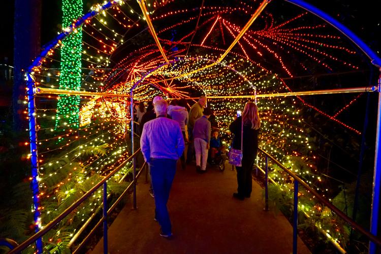 garden lights holiday nights atlanta botanical garden atlanta georgia