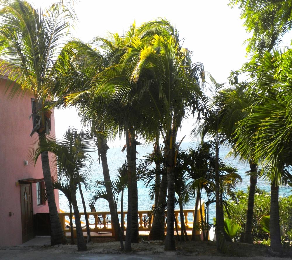 coconuttrees.jpg