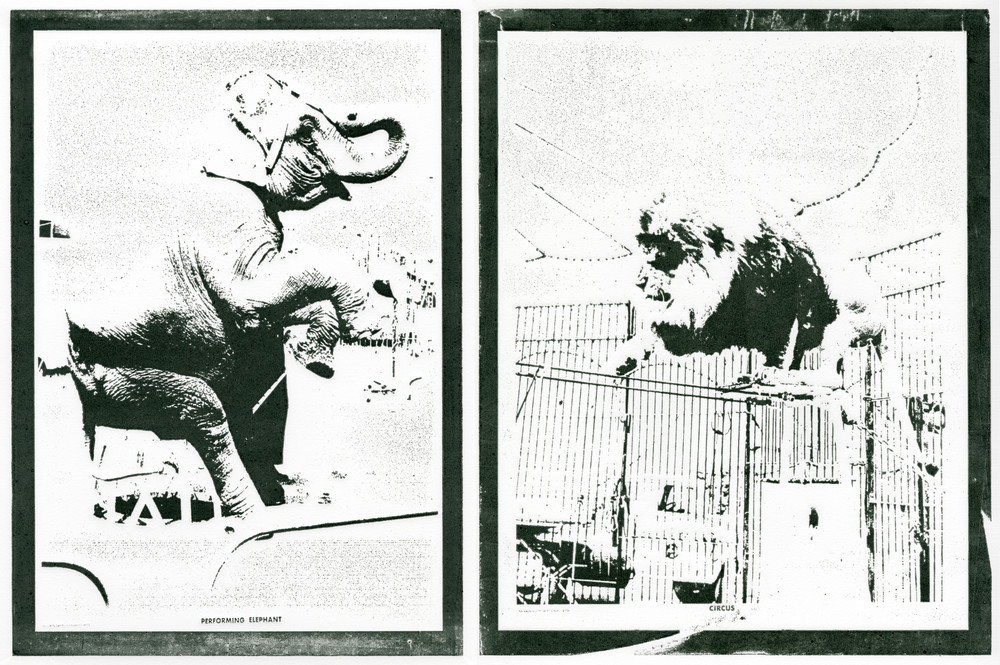Current Affairs Films presents -Educational Tools #34 and #35 or Performing Elephant, Circus Lion