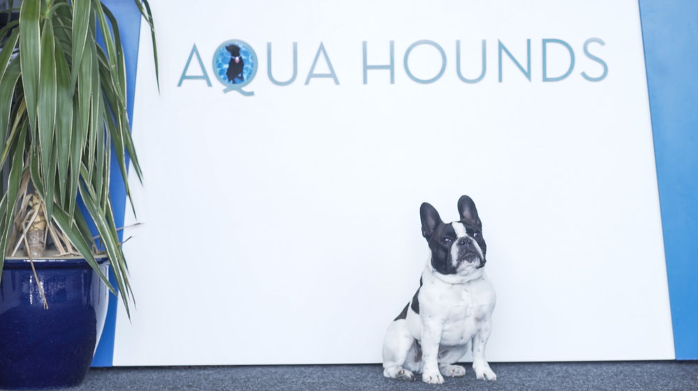 Aqua Hounds-23.jpg