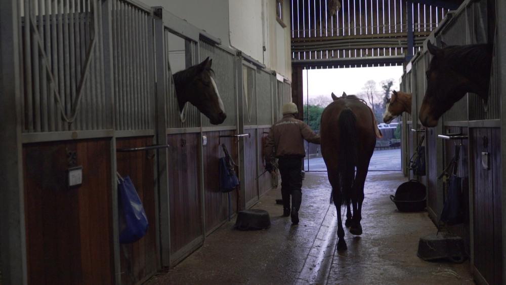Horse2_AnnDuffield.jpg