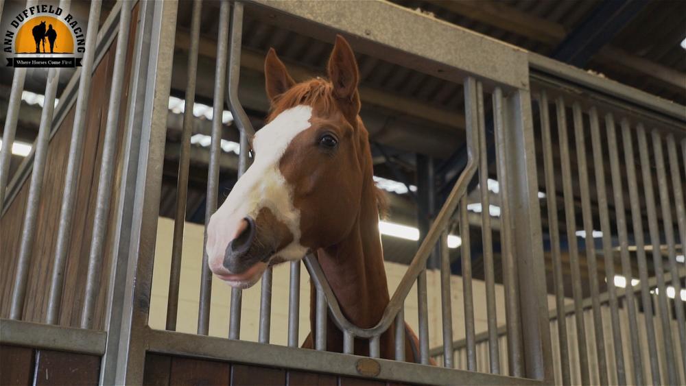 HorseFace_AnnDuffield.jpg
