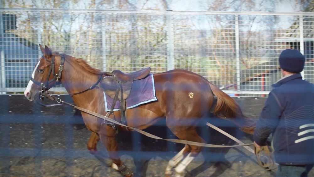 Horse3_AnnDuffield.jpg