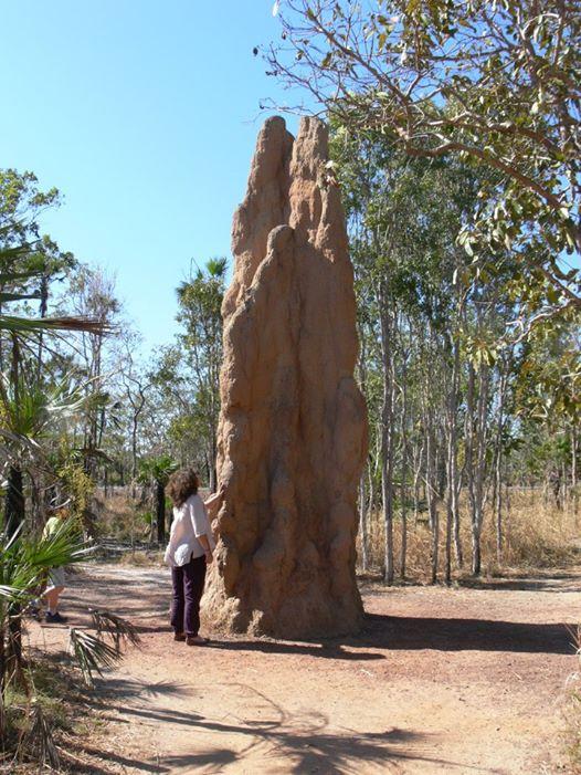 TERMITE MOUND, Northern Territory, Australia