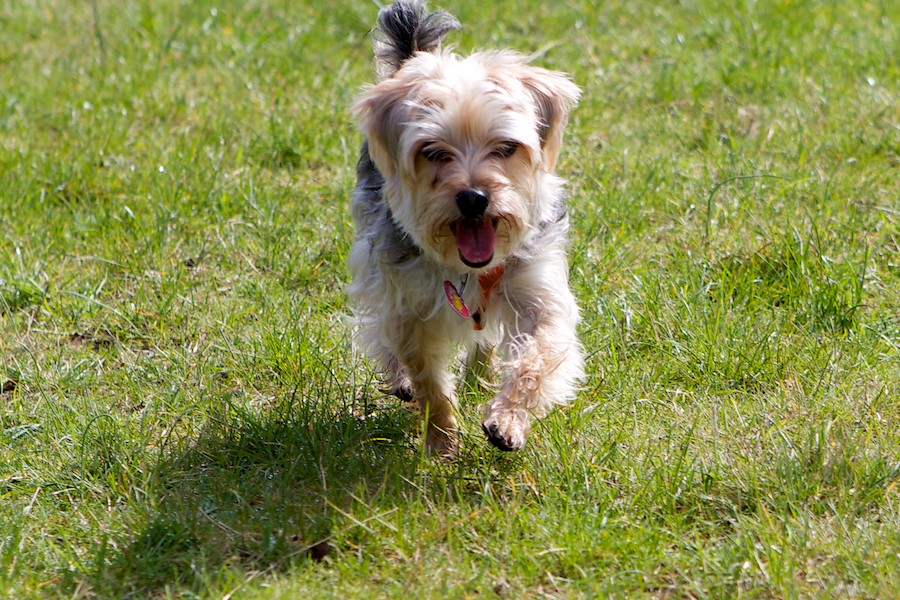 Dog-boarding-Barnes
