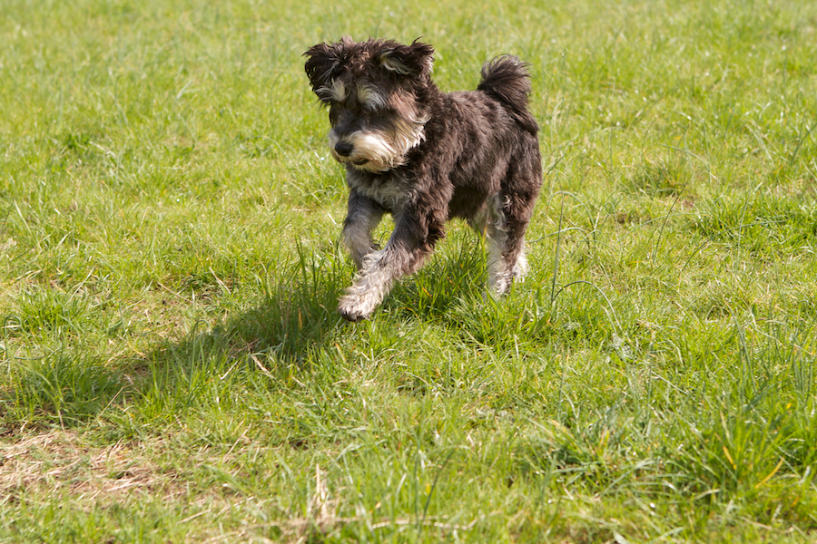 Dog-Walker-Boarding-Kew Gardens