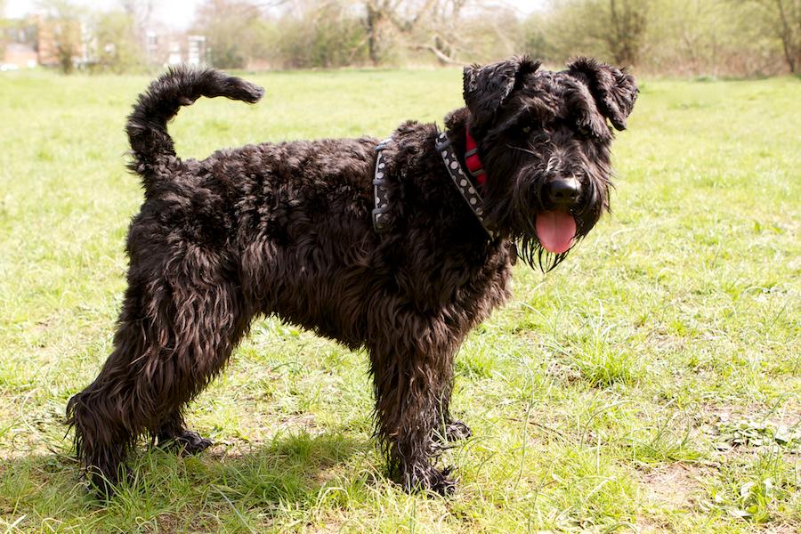 Richmond-Local-Dog-Walker-Brentford
