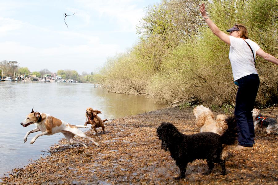 Dog-Sitter-Richmond-Park-2