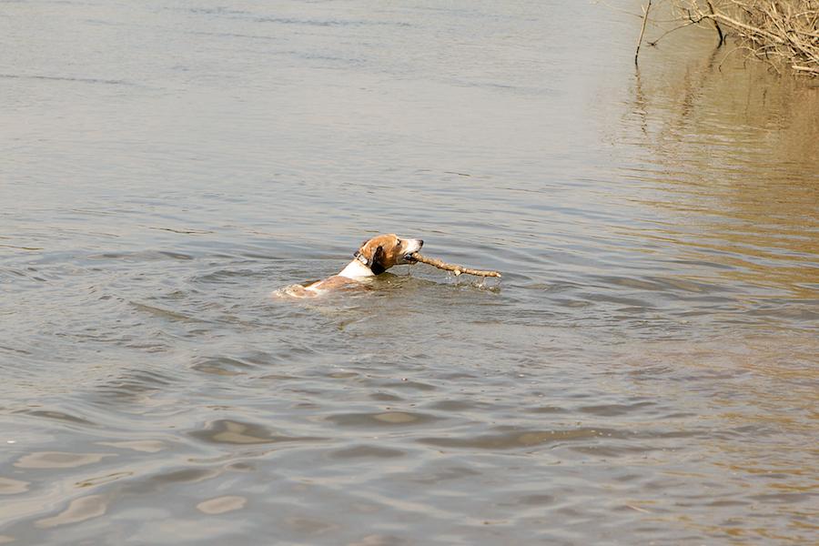 Richmond-Dog-Boarding-Sitting