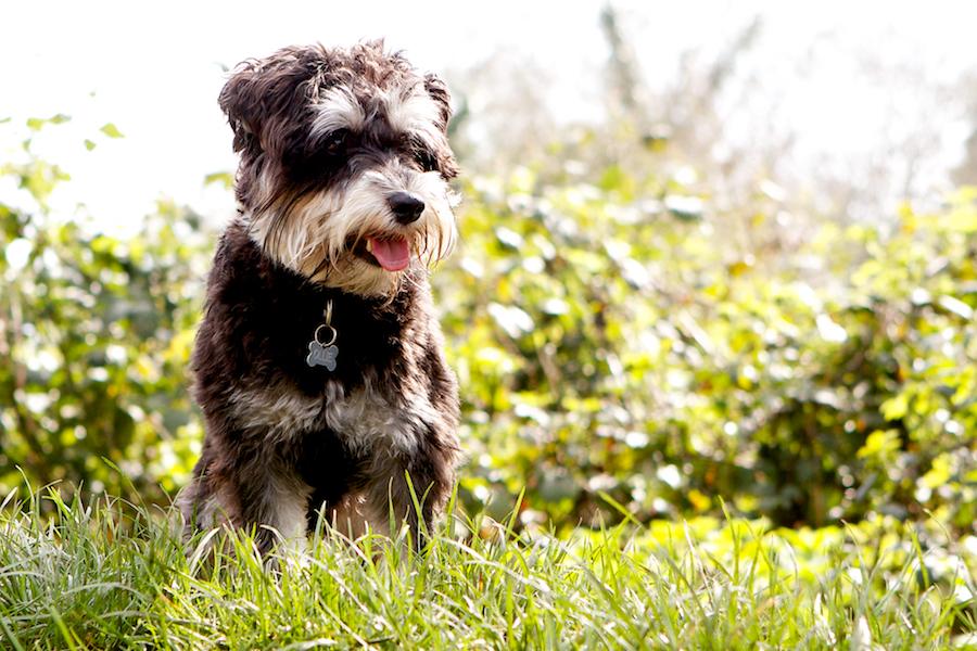 Barnes-Dog-Sitter-Groomer