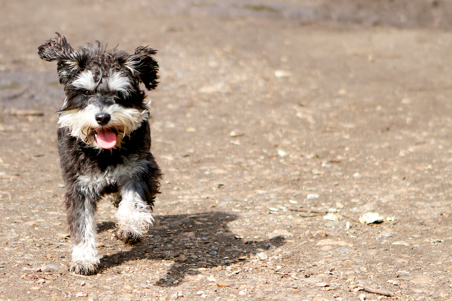 Group-Dog-Boarding-Kew