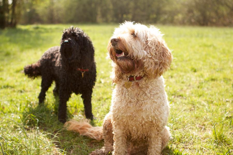 Thames-Dog-Groomer