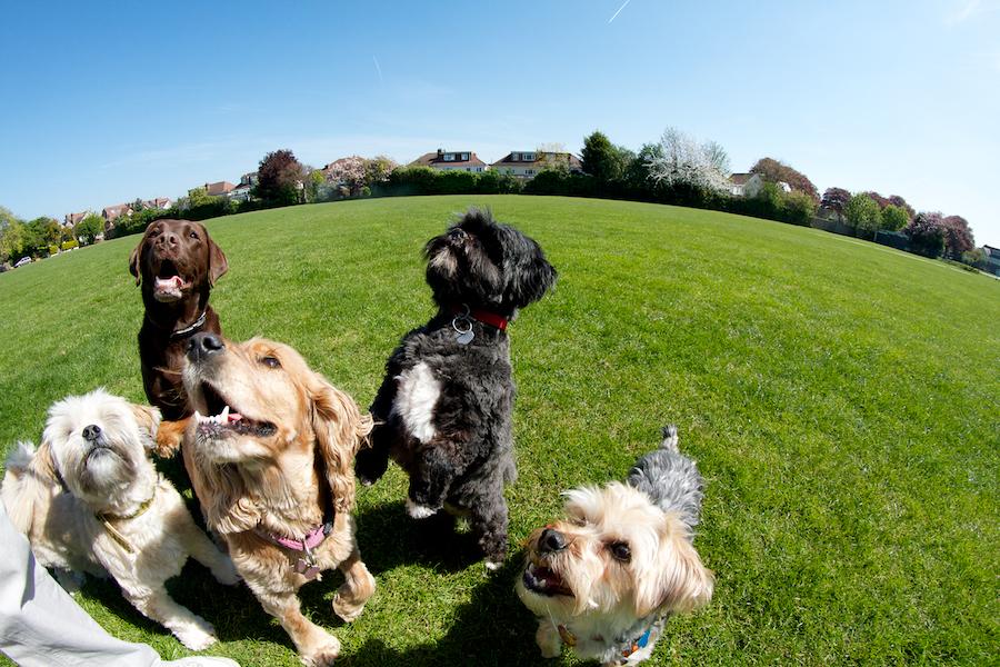Dog Grooming-richmond-park-1