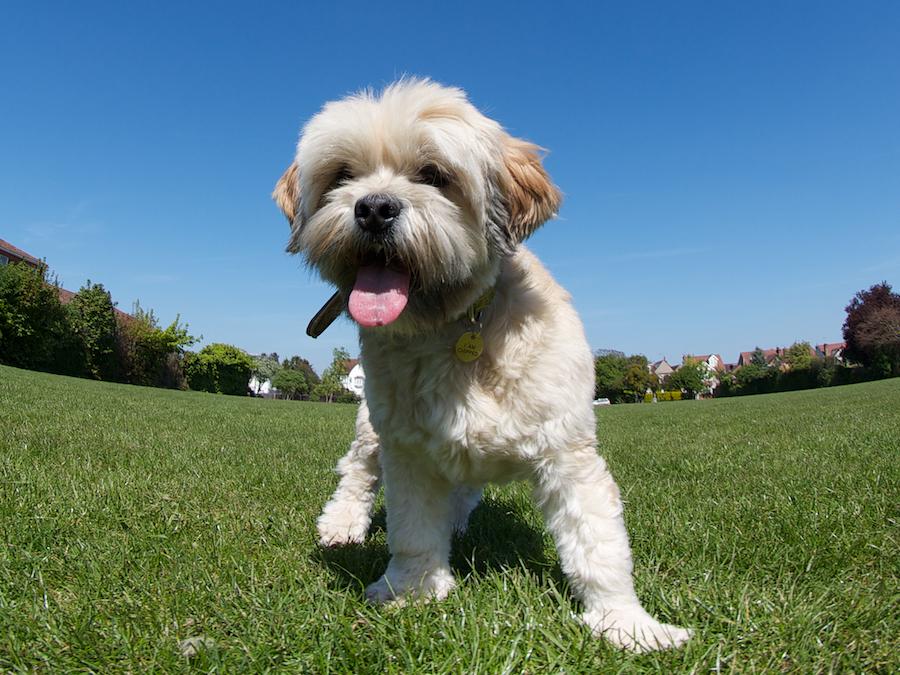 Local-Dog-Sitter