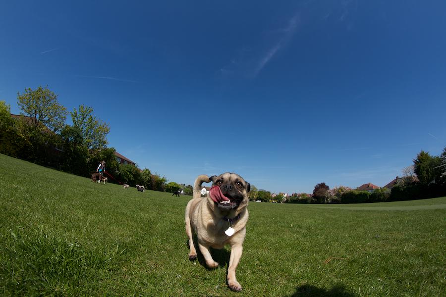 Ham-Lands-Dog-Sitter