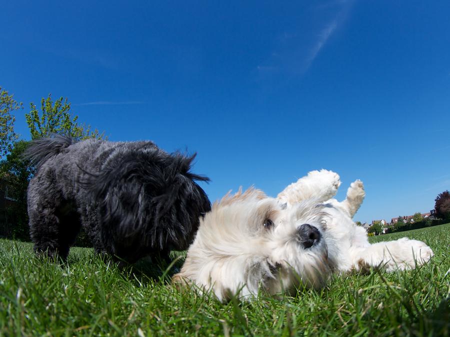 Dog-Kew-Richmond