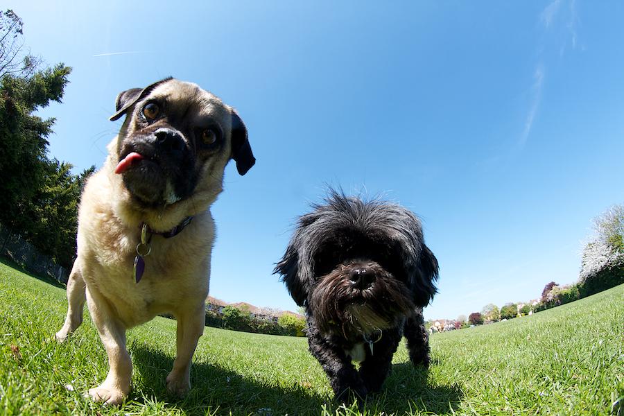 Richmond-Park-Dog-Sitter