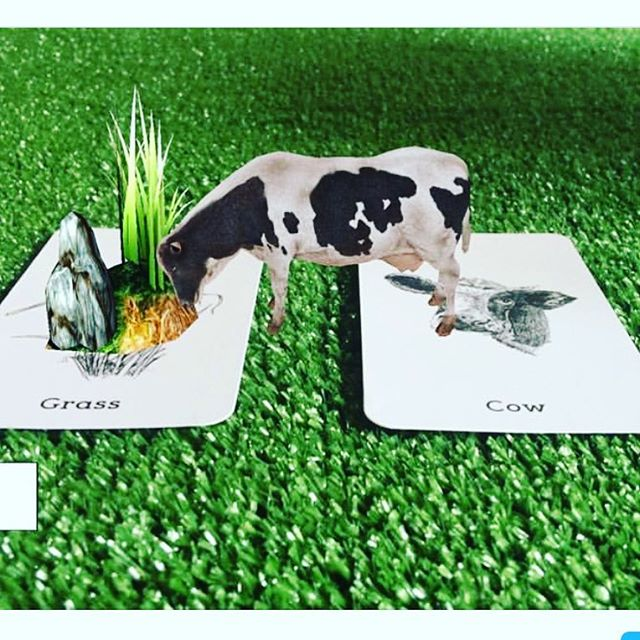 Grass-Fed Steak for lunch anyone? I'm terrible 😜 #moo #animals #augmentedreality #flashcards #educationalprints #education #learning #kidslearning #cow #grass #feedingtime #animal4dcards #virtualzoo #zoo #christmasgifts #stockingfiller #farmanimals #lunchtime #monday #homeschool #alphabet #kidsgifts #homeschooling