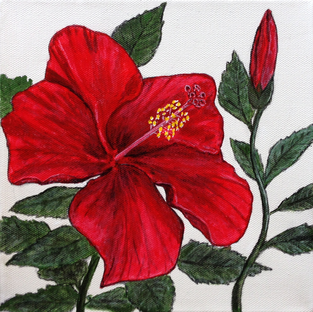 Hibiscus by David DeWitt