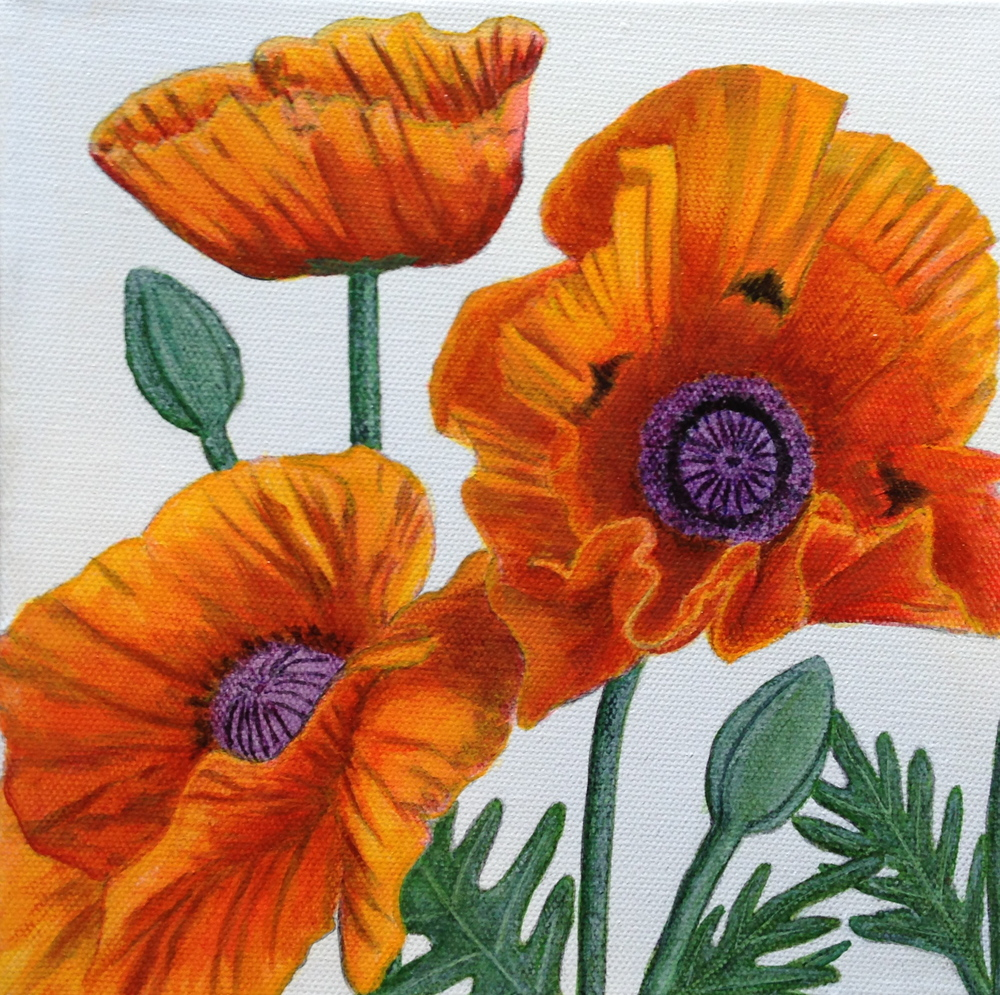 Poppies by David DeWitt