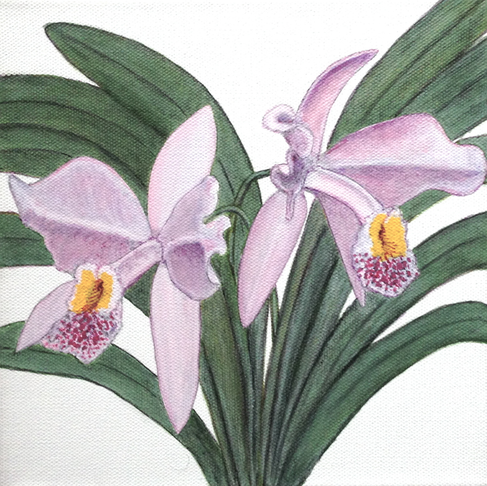 Orchids by David DeWitt