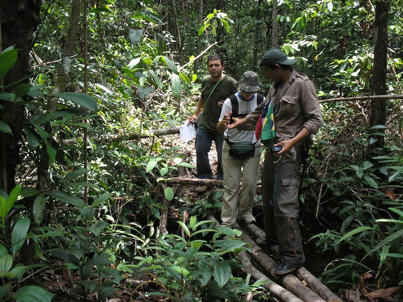 jungle11.jpg