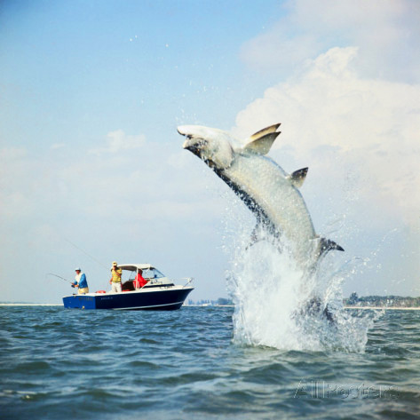 tarpon-fishing.jpg