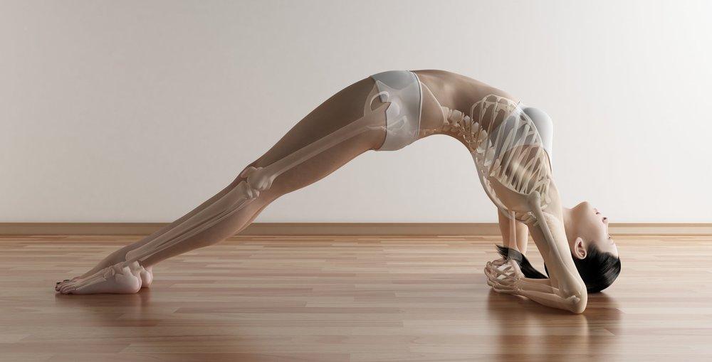 Anatomy FUN-damentals Workshop - Manchester — Angela Jervis-Read