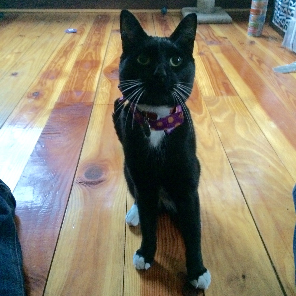love aunt maggie | cat bow tie