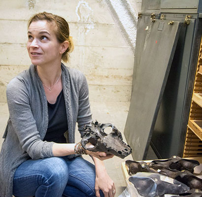 Lesle Hlusko with fossilized skulls of dire wolves. (Photo by Kevin Ho Nguyen.)