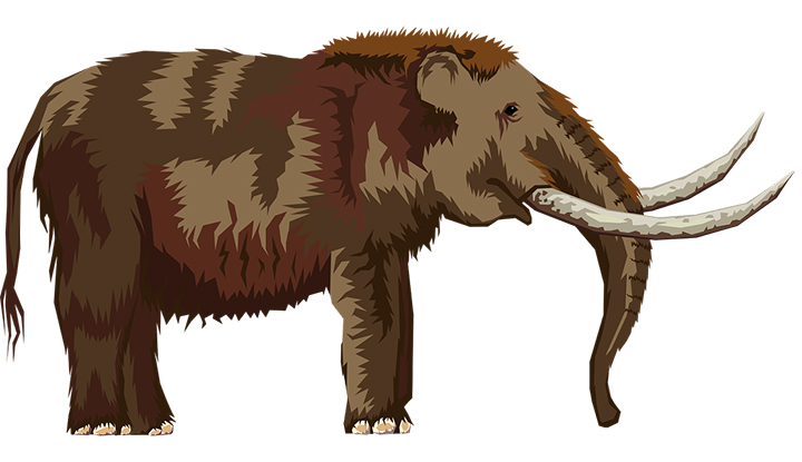 elephant-2026638_1280.jpg