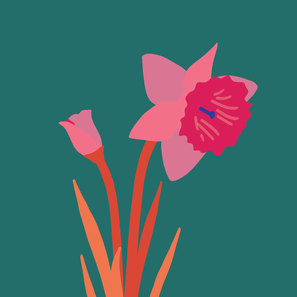 pink daffodils-02.png