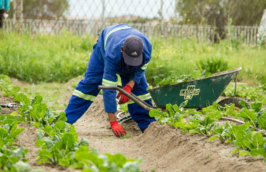 Heat-Related Illnesses California Agricultural Workers