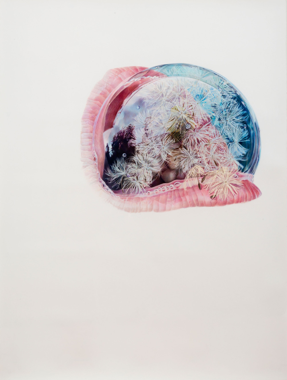 Julia Randall, Dandelion, 2012, colored pencil on paper_sm.jpg