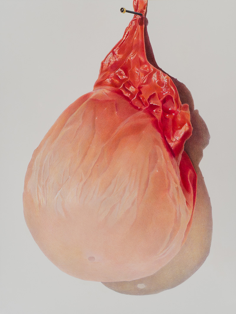 JR026, Julia Randall, Pinned Apricot, 2013, colored pencil on paper_sm.jpg
