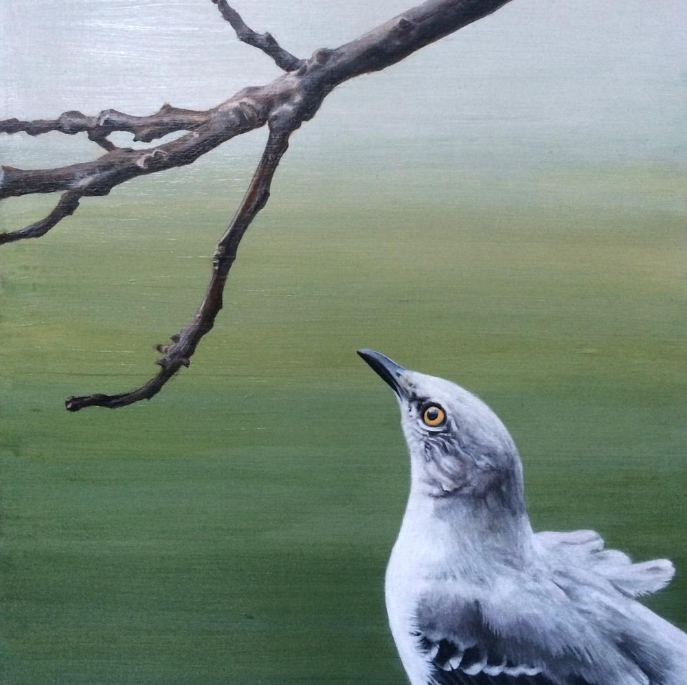 study, mockingbird