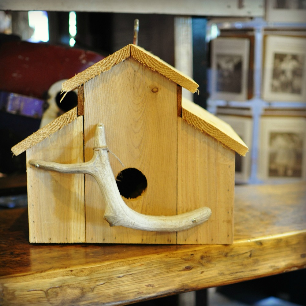 Bird House_small.jpg
