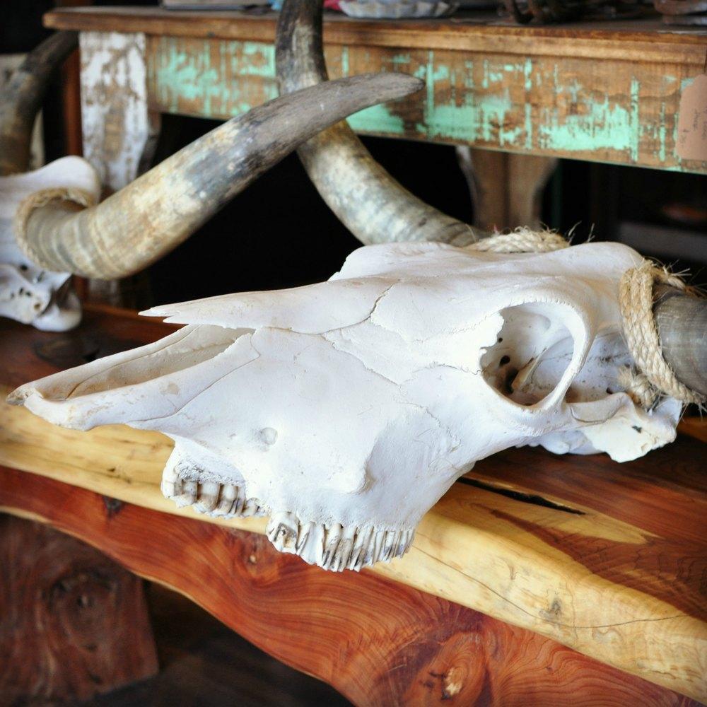 Skulls_small.jpg