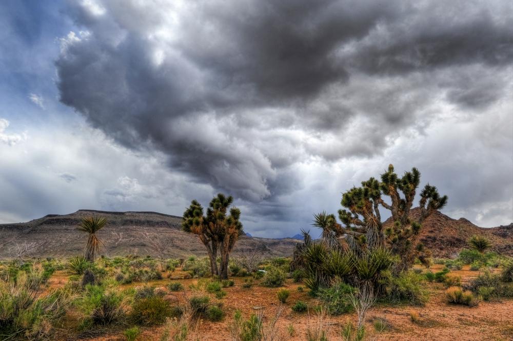 Desert Storm Brewing.jpg