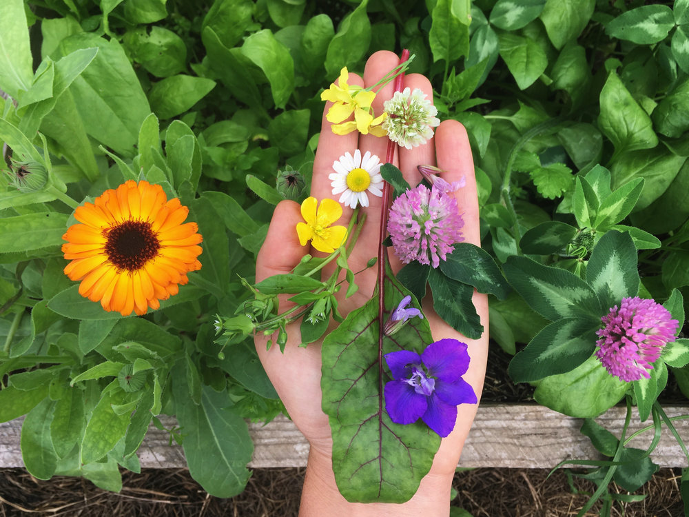 Hand and rainbow flowers.jpg