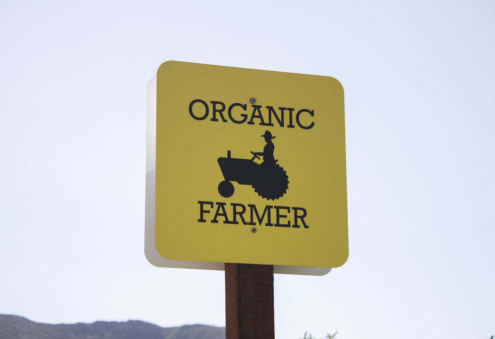 Folded Hills Farm, California Organic Farms, Los Alamos Travel Guide, California Road Trips, Figueroa Farms Olive Oil, Los Alamos, Gaviota, Gaviota California