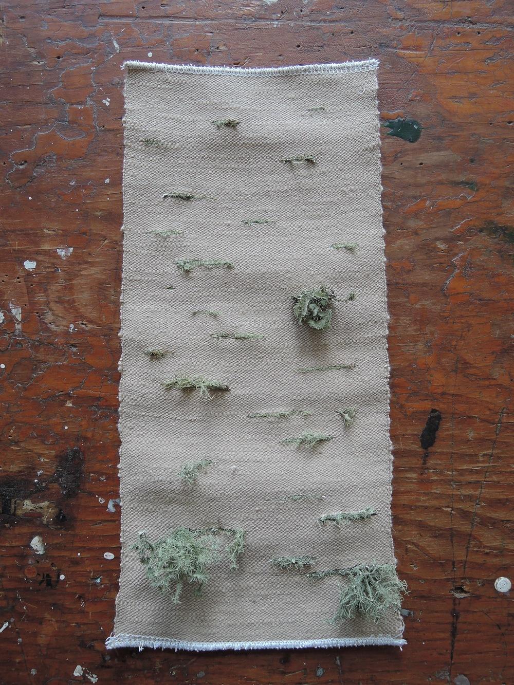 Lichen sample.
