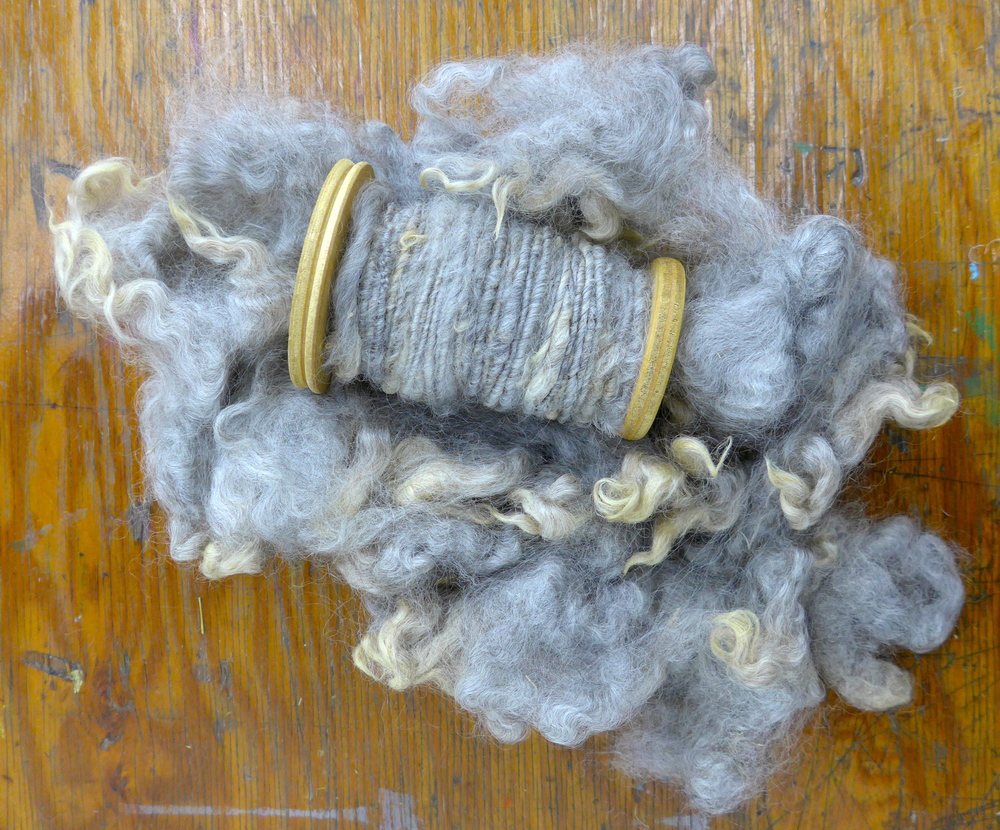 Pixel's fleece makes an incredible, natural yarn.  It has a beautiful sheen, just a little bit of variegation, and so many beautiful, subtle details.  I am excited to see it incorporated in my weaving.  Pixel loves to hang out with his family and I cannot wait for his next shearing this spring!