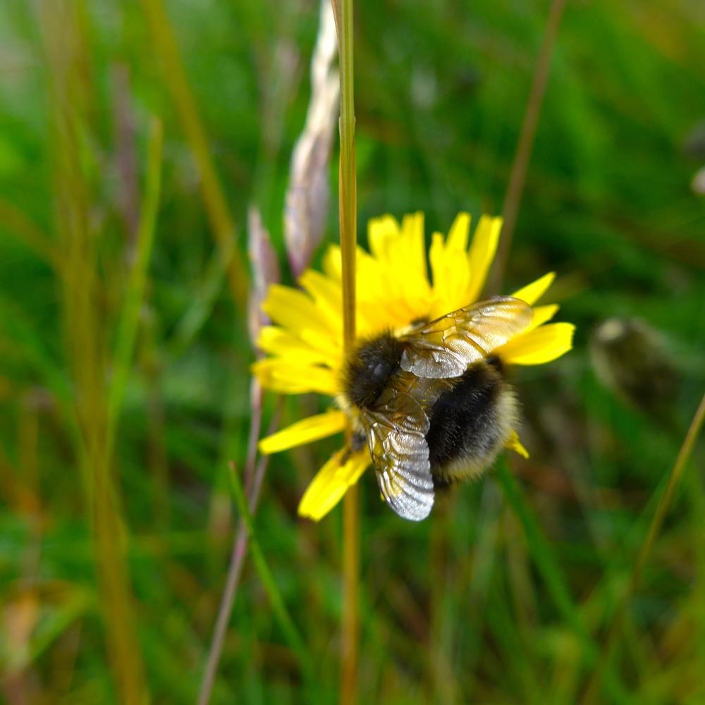 Cute bee along the way.