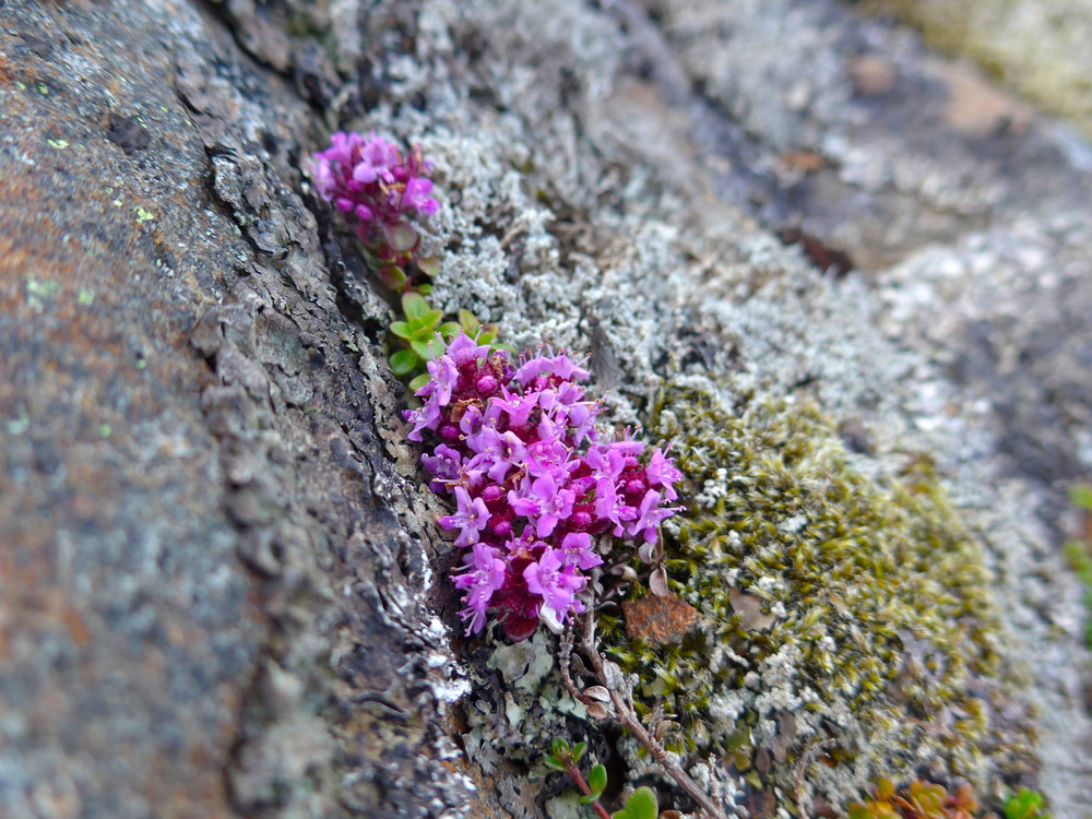 The tiniest little wonderful moss flowers.
