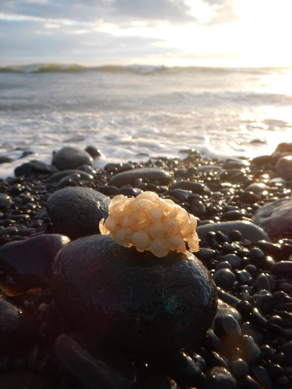 Ocean treasures.