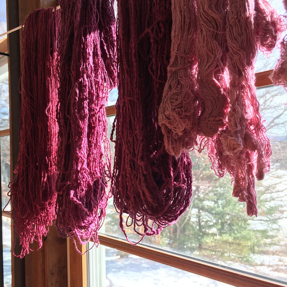 A few skeins of the hundreds of skeins of yarn I naturally dyed drying in the window.
