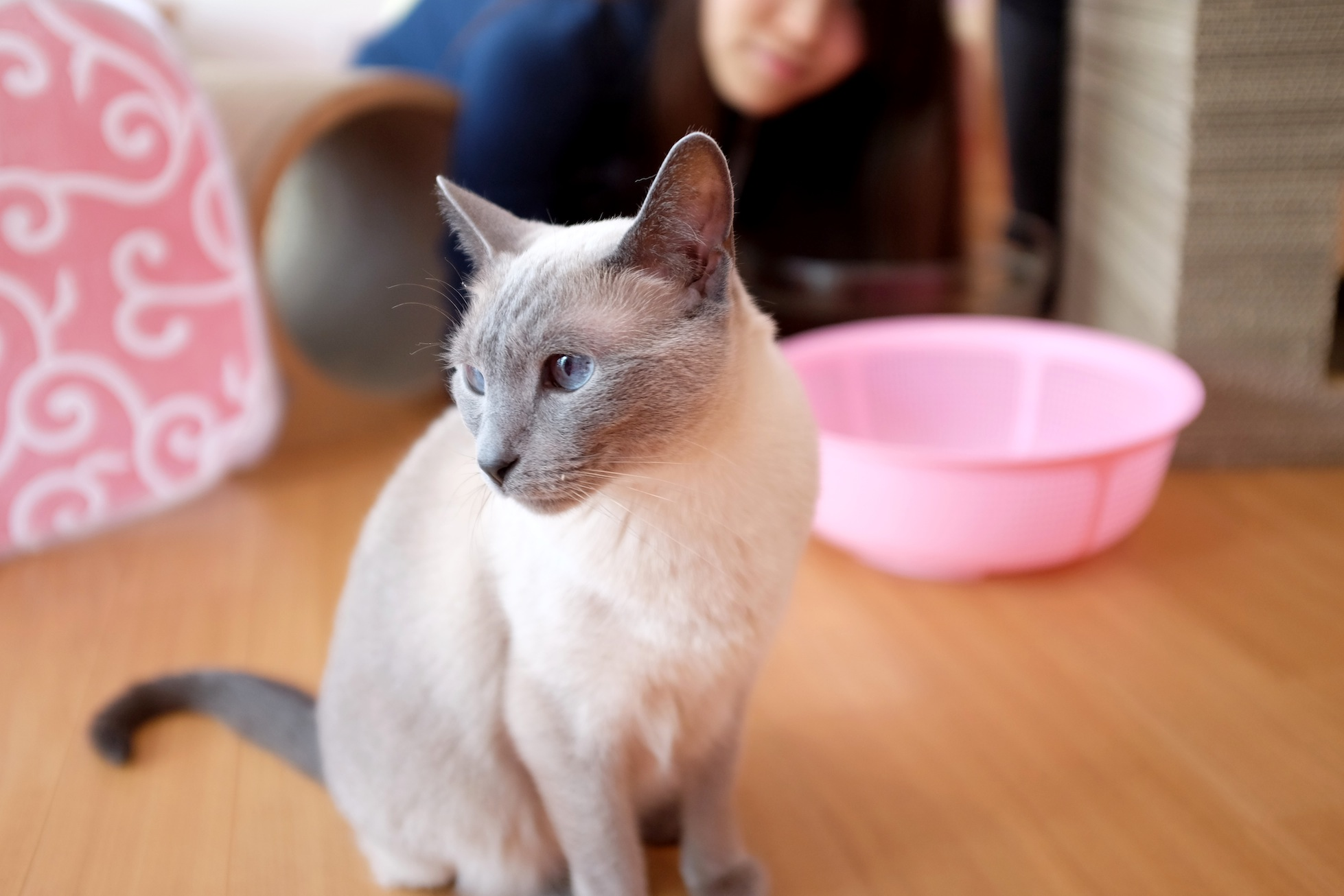 Hapineko, cat cafe, cats, crazy cat lady, kitten, cute, neko, kawaii, food, japan, Shibuya, meow, kitty, travel, japanese, nezuki